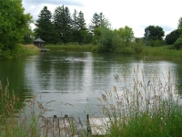 spring-retreat-swimming-in-pond